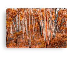 Bush Melody - Tumbarumba NSW - The HDR EXperience Canvas Print