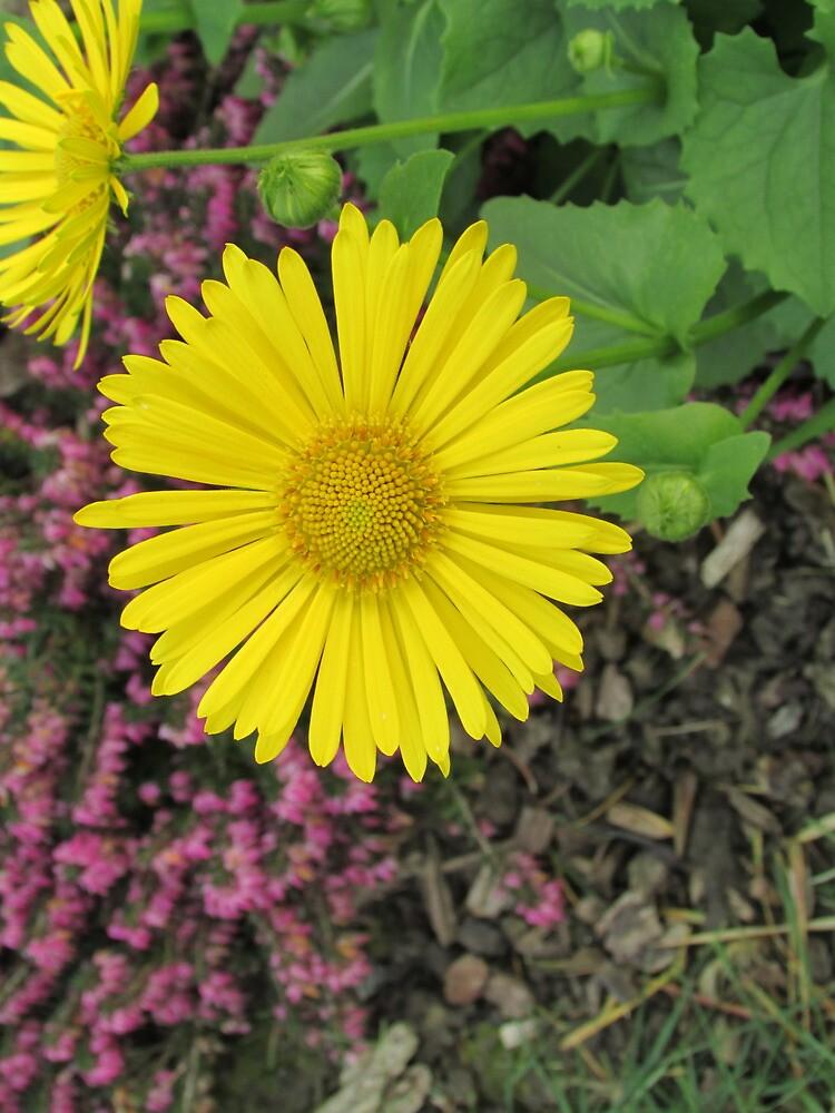 Sunny Day by floweryfotos