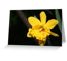 Daring Daffodils Greeting Card