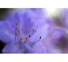 Lavender Clouds Photographic Print