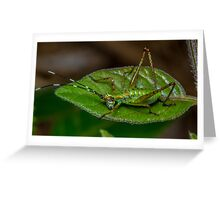 Bright Bug Greeting Card