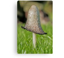 Shaggy Inkcap Canvas Print