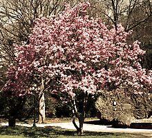 Blooming Tree in Hot Springs Arkansas by Emily Rose
