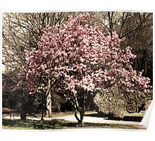 Blooming Tree in Hot Springs Arkansas Poster