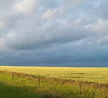 Amber Waves of Grain by dkpenman