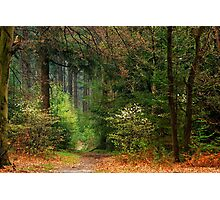 Going on an early-spring walk in the forest Photographic Print