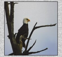eagle striking a pose (square) Baby Tee