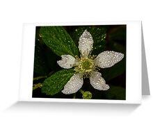 BlackBerry Bloom Greeting Card