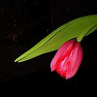 The Grace Of The Tulip by Fara