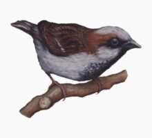Sparrow Baby Tee