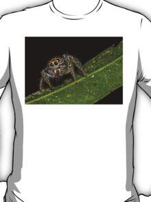 Jumping Spider 1 T-Shirt