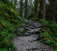 Mirkwood Pathway by TwistedtheClown