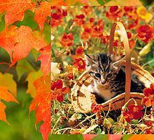 Kitten in A Basket in Autumn by Jane Neill-Hancock
