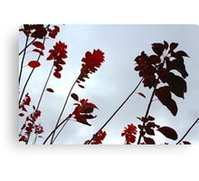 Red leaves in sky Canvas Print