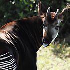 Okapi by Carol Bailey-White