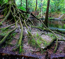 Cascading Roots by Symbiosis - Justin Brosey