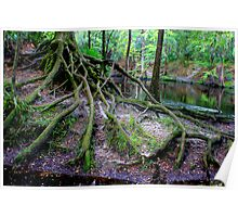Cascading Roots Poster