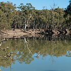 Murrumbidgee reflections by Ian Fegent