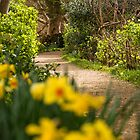 Country Path by Country  Pursuits