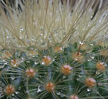Cactus after the rain. by Elisabeth Thorn