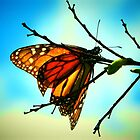 MONARCH BUTTERFLY (VIVID COLOR) by Sandra  Aguirre