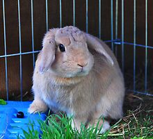 """Miss Mocha Floppy Ears - """"This is MY Blueberry."""" by Meg Hart"""