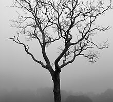 Fog and Tree by Alex Wagner