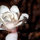 Beauty At The End Of The Stem by Loree McComb