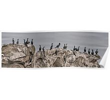 Cormorants on the Belle Chain. Poster