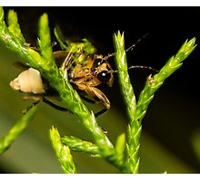 Firefly (1) Photographic Print