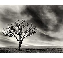 tree thunder sky clouds Photographic Print