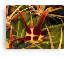 Cacti Hooks Canvas Print