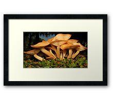 Fungal Beauty - Armillaria tabescens Framed Print