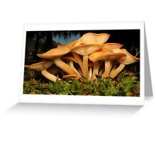 Fungal Beauty - Armillaria tabescens Greeting Card
