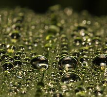 Leaf Water Droplets by Symbiosis - Justin Brosey