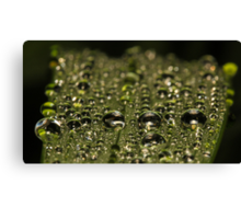 Leaf Water Droplets Canvas Print