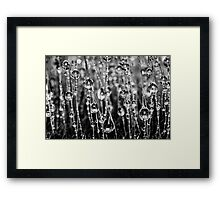 Moss Drops (Black and White) Framed Print