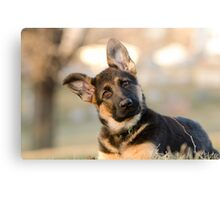 Puppy German Shepherd Canvas Print