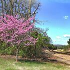 A beautiful Spring Redbud Tree by LarryB007