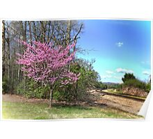 A beautiful Spring Redbud Tree Poster