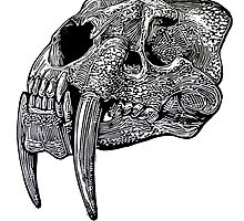 Sabre tooth skull by Ieuan  Edwards