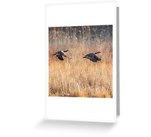 Canada Geese Square Greeting Card