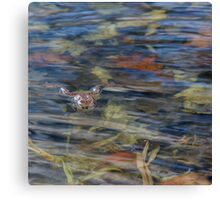 Wood Frog Square Canvas Print