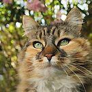 Cat in Spring by meg price
