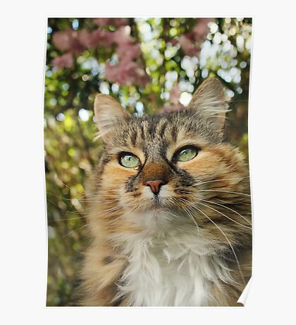 Cat in Spring Poster