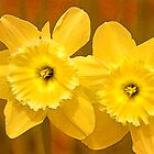 Daffodils on Fire by Eileen McVey