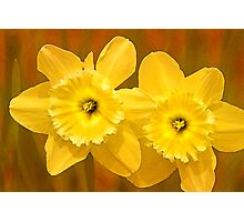 Daffodils on Fire Photographic Print