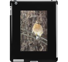 Red-Shouldered Hawk iPad Case/Skin