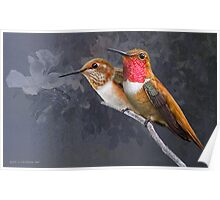 pair of rufous hummingbirds in portrait Poster