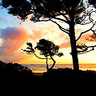 Tree Silhouette..Waldport, Oregon by trueblvr